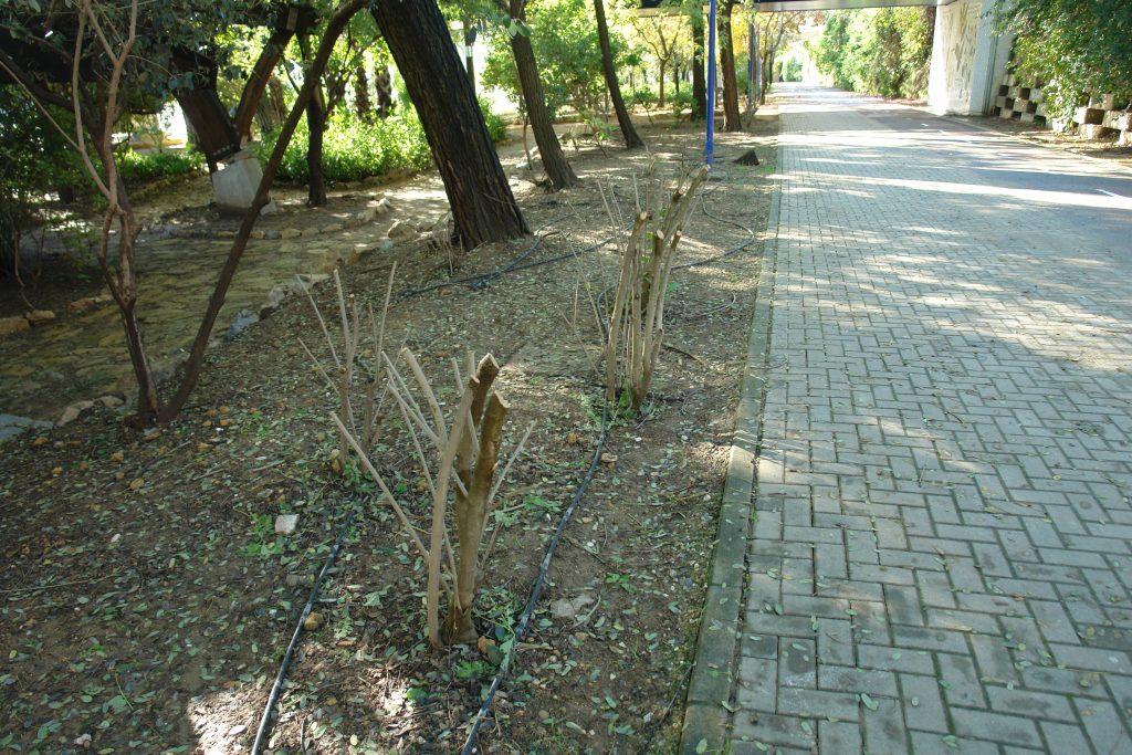 jardin-americano-arrasando-arbustos-5-dic-2016-029