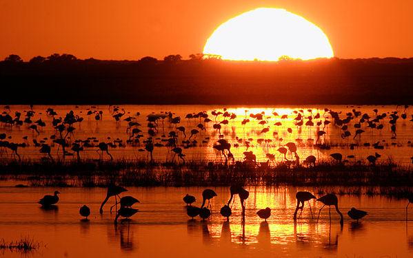 Doñana, paraíso para las aves acuáticas
